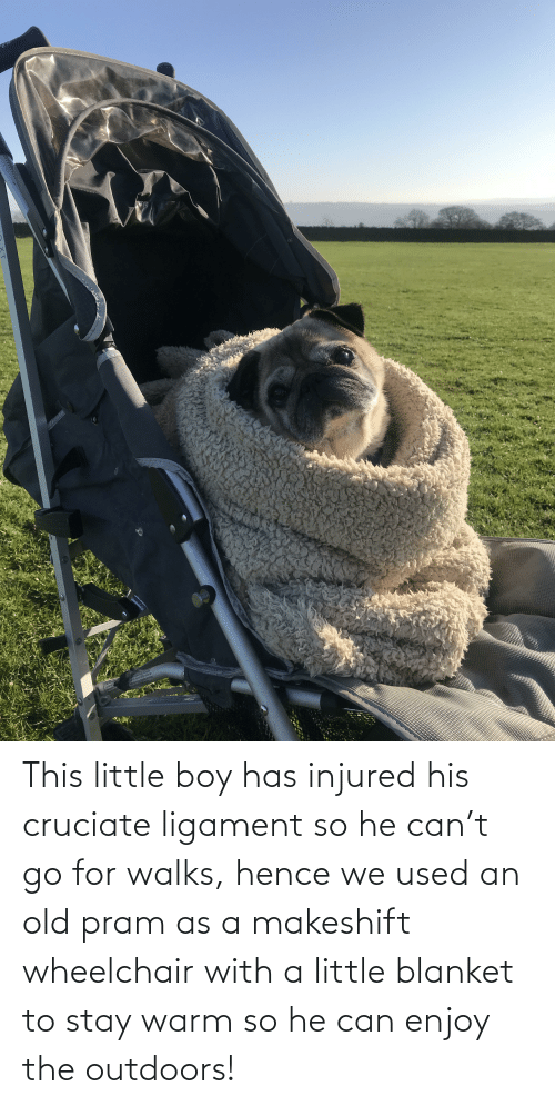 ligament: This little boy has injured his cruciate ligament so he can't go for walks, hence we used an old pram as a makeshift wheelchair with a little blanket to stay warm so he can enjoy the outdoors!