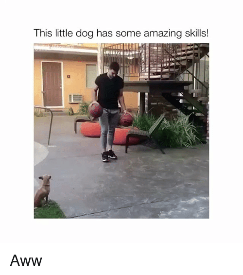 Aww, Amazing, and Dog: This little dog has some amazing skills! Aww