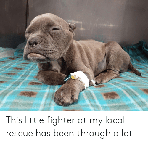 Been Through A Lot: This little fighter at my local rescue has been through a lot