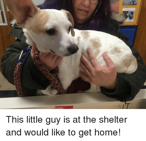 SIZZLE: This little guy is at the shelter and would like to get home!