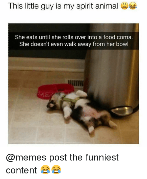 Food, Funny, and Memes: This little guy is my spirit animal  She eats until she rolls over into a food coma.  She doesn't even walk away from her bowl @memes post the funniest content 😂😂