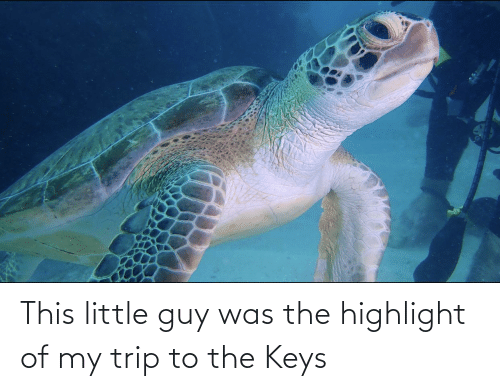 the keys: This little guy was the highlight of my trip to the Keys