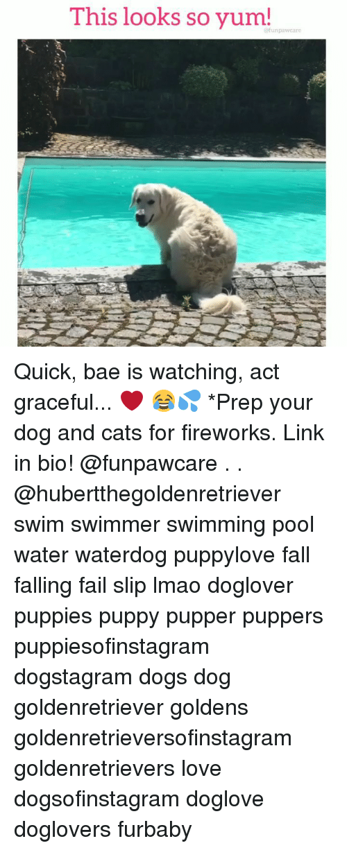 swimmer: This looks so yum! Quick, bae is watching, act graceful... ❤️ 😂💦 *Prep your dog and cats for fireworks. Link in bio! @funpawcare . . @hubertthegoldenretriever swim swimmer swimming pool water waterdog puppylove fall falling fail slip lmao doglover puppies puppy pupper puppers puppiesofinstagram dogstagram dogs dog goldenretriever goldens goldenretrieversofinstagram goldenretrievers love dogsofinstagram doglove doglovers furbaby
