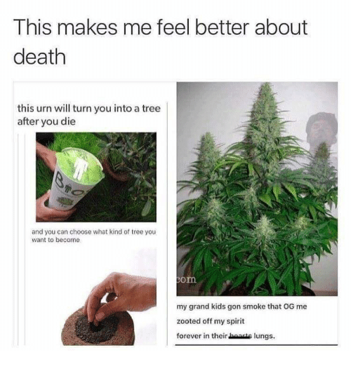 Zooted: This makes me feel better about  death  this urn will turn you into a tree  after you die  and you can choose what kind of tree you  want to become  om  my grand kids gon smoke that OG me  zooted off my spirit  forever in their baase lungs