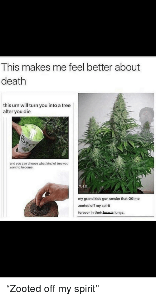 Zooted: This makes me feel better about  death  this urn will turn you into a tree  after you die  and you can choose what kind of tree you  want to become  om  zooted off my spirit  forever in their haasts lungs.