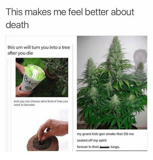 Zooted: This makes me feel better about  death  this urn will turn you into a tree  after you die  and you can choose what kind of tree you  want to become  om  my grand kids gon smoke that OG me  zooted off my spirit  forever in their boanis lungs.