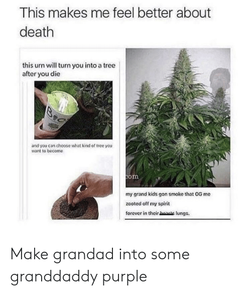 Zooted: This makes me feel better about  death  this urn will turn you into a tree  after you die  Br  and you can choose what kind of tree you  want to become  com  my grand kids gon smoke that OG me  zooted off my spirit  forever in their haate lungs. Make grandad into some granddaddy purple