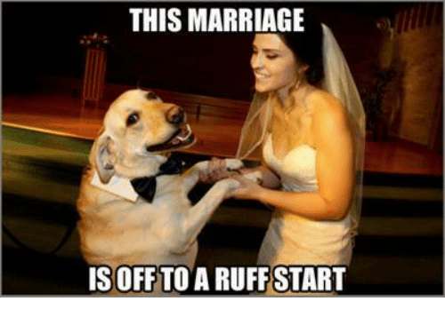 memes: THIS MARRIAGE  ISOFF TO A RUFFSTART