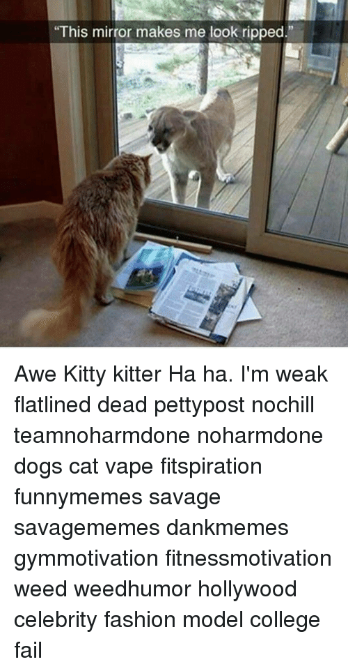 """awe: """"This mirror makes me look ripped."""" Awe Kitty kitter Ha ha. I'm weak flatlined dead pettypost nochill teamnoharmdone noharmdone dogs cat vape fitspiration funnymemes savage savagememes dankmemes gymmotivation fitnessmotivation weed weedhumor hollywood celebrity fashion model college fail"""