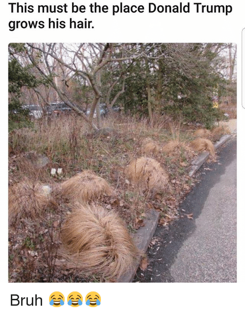 Bruh, Donald Trump, and Memes: This must be the place Donald Trump  grows his hair. Bruh 😂😂😂