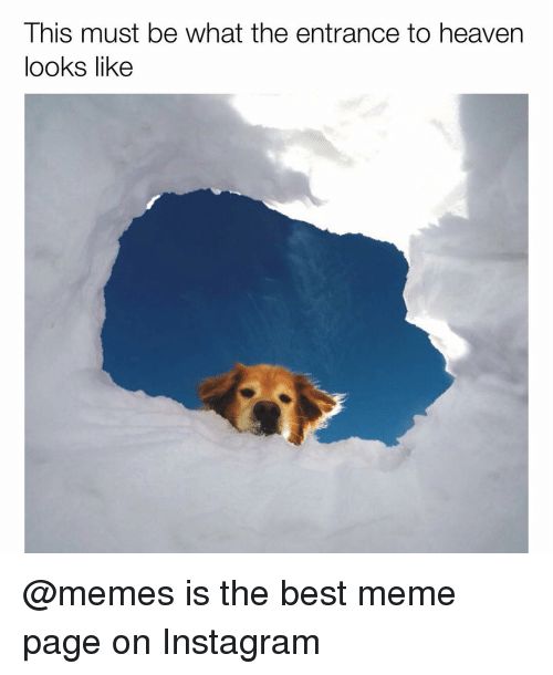 Heaven, Memes, and 🤖: This must be what the entrance to heaven  looks like @memes is the best meme page on Instagram