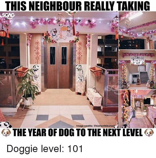 Memes, Image, and 🤖: THIS NEIGHBOUR REALLY TAKING  Image credits: @kishxnthikumxri  THE YEAR OF DOG TO THE NEXT LEVEL Doggie level: 101