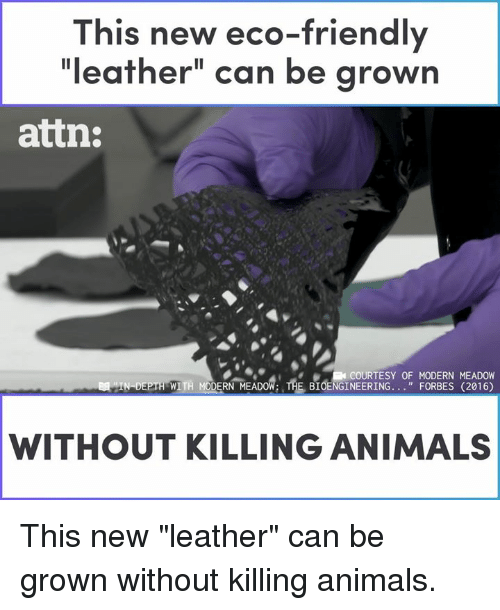 """Meadow: This new eco-friendly  """"leather"""" can be grown  attn:  COURTESY OF MODERN MEADOW  WITH MODERN MEADOW: THE BIOENGINEERING. . """"FORBES (2016)  WITHOUT KILLING ANIMALS This new """"leather"""" can be grown without killing animals."""