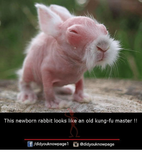 kung fu master: This newborn rabbit looks like an old kung-fu master !!  /didyouknowpagel@didyouknowpage