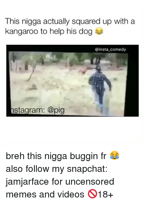 Memes, Snapchat, and Square Up: This nigga actually squared up with a  kangaroo to help his dog  insta comedy  stagram: @pig breh this nigga buggin fr 😂 also follow my snapchat: jamjarface for uncensored memes and videos 🚫18+