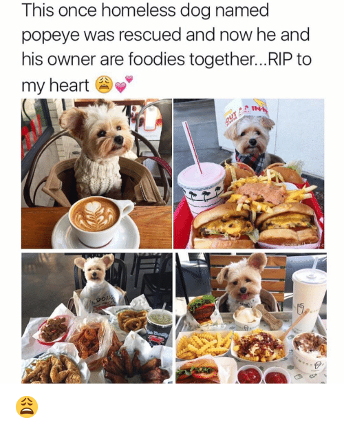 Memes, Popeyes, and Popeye: This once homeless dog named  popeye was rescued and now he and  his owner are foodies together... RIP to  my heart  IN 😩