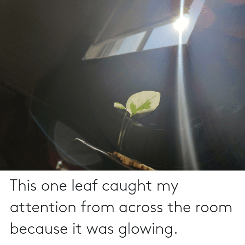 glowing: This one leaf caught my attention from across the room because it was glowing.
