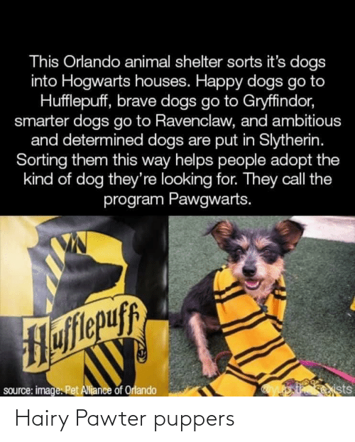 Gryffindor: This Orlando animal shelter sorts it's dogs  into Hogwarts houses. Happy dogs go to  Hufflepuff, brave dogs go to Gryffindor,  smarter dogs go to Ravenclaw, and ambitious  and determined dogs are put in Slytherin.  Sorting them this way helps people adopt the  kind of dog they're looking for. They call the  program Pawgwarts.  flepuff  siists  source: image. Pet Alliance of Orlando Hairy Pawter puppers