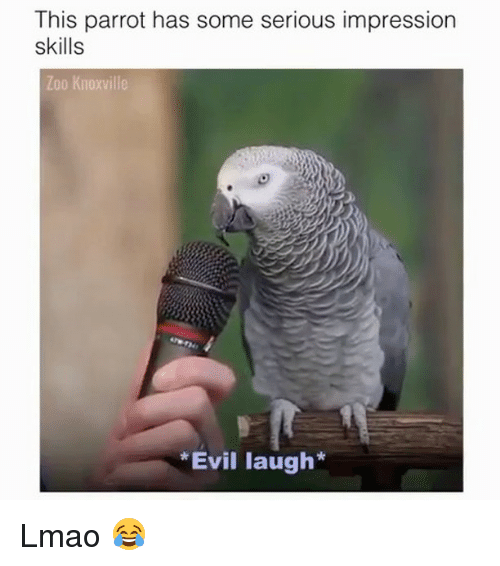 Lmao, Memes, and Evil: This parrot has some serious impression  skills  Zoo Knoxville  Evil laugh* Lmao 😂