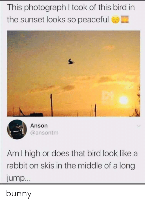 Photograph: This photograph I took of this bird in  the sunset looks so peaceful  Anson  @ansontm  Am I high or does that bird look like a  rabbit on skis in the middle of a long  jump... bunny
