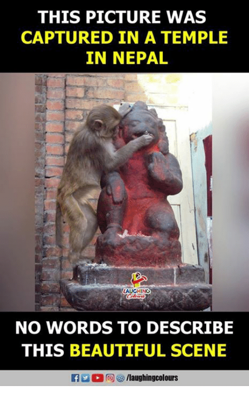 Nepal: THIS PICTURE WAS  CAPTURED IN A TEMPLE  IN NEPAL  LAUGHING  NO WORDS TO DESCRIBE  THIS BEAUTIFUL SCENE
