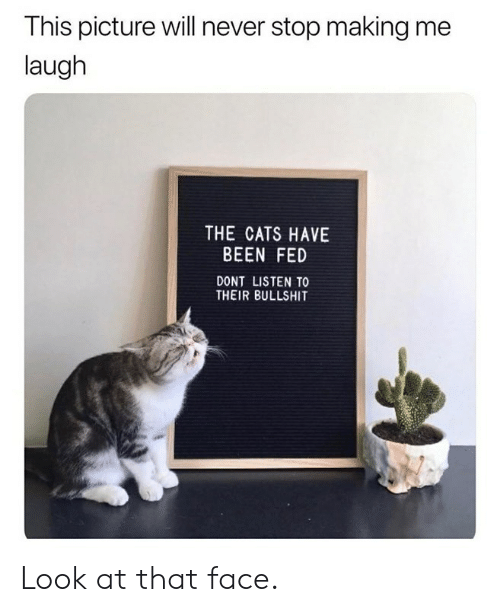 that face: This picture will never stop making me  laugh  THE CATS HAVE  BEEN FED  DONT LISTEN TO  THEIR BULLSHIT Look at that face.
