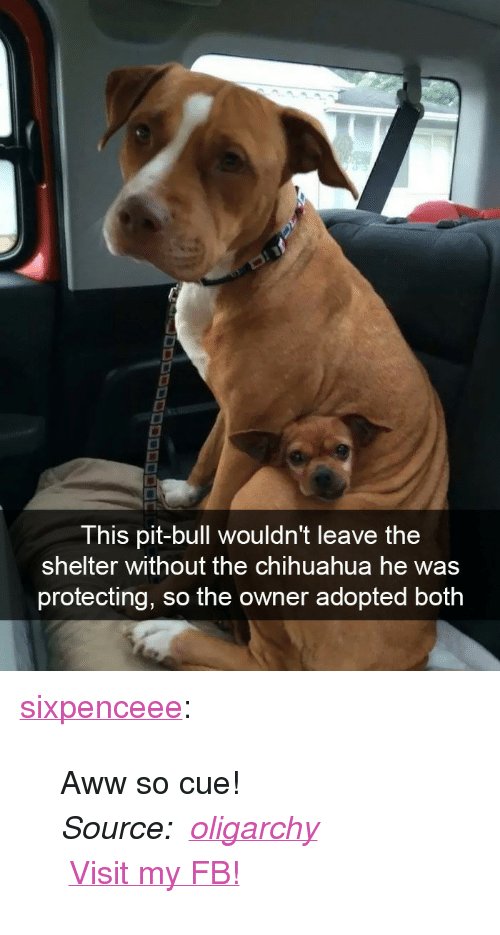 "Aww, Chihuahua, and Facebook: This pit-bull wouldn't leave the  shelter without the chihuahua he was  protecting, so the owner adopted both <p><a href=""http://sixpenceee.com/post/171881938629/aww-so-cue-source-oligarchy-visit-my-fb"" class=""tumblr_blog"">sixpenceee</a>:</p>  <blockquote><p>Aww so cue! <br/></p><p><i>Source:   <a href=""https://imgur.com/gallery/mxYTj"">oligarchy</a></i></p><p style=""""><i><a href=""https://imgur.com/gallery/mxYTj""></a></i> <a href=""https://t.umblr.com/redirect?z=https%3A%2F%2Fwww.facebook.com%2Fsixpenceee%2F&t=OTA2Njc5NTM1MzE3YjU1MGJlN2M2ODUyZmYyNDFlNTJmMjAzNTE2MyxYRGR6eWplQw%3D%3D&b=t%3AGI8zUQG01CnECOB8T6xuaw&p=http%3A%2F%2Fsixpenceee.com%2Fpost%2F171882803275%2Fhappy-pi-day-picture-source&m=1"">Visit my FB!</a>  <br/></p></blockquote>"