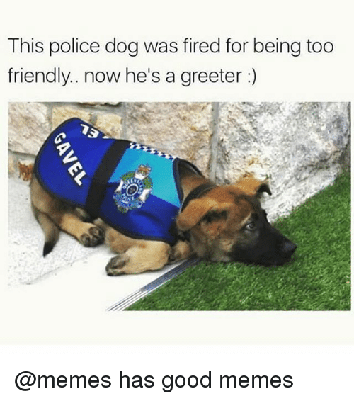 Funny, Memes, and Police: This police dog was fired for being too  friendly.. now he's a greeter @memes has good memes
