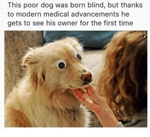 this poor dog was born blind but thanks to modern 4823460 this poor dog was born blind but thanks to modern medical