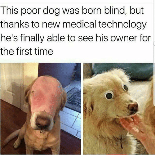 Memes, Technology, and Time: This poor dog was born blind, but  thanks to new medical technology  he's finally able to see his owner for  the first time
