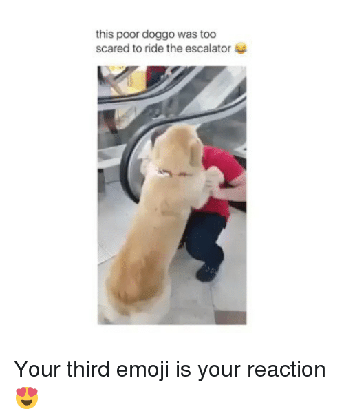 Escalator: this poor doggo was too  scared to ride the escalator Your third emoji is your reaction😍