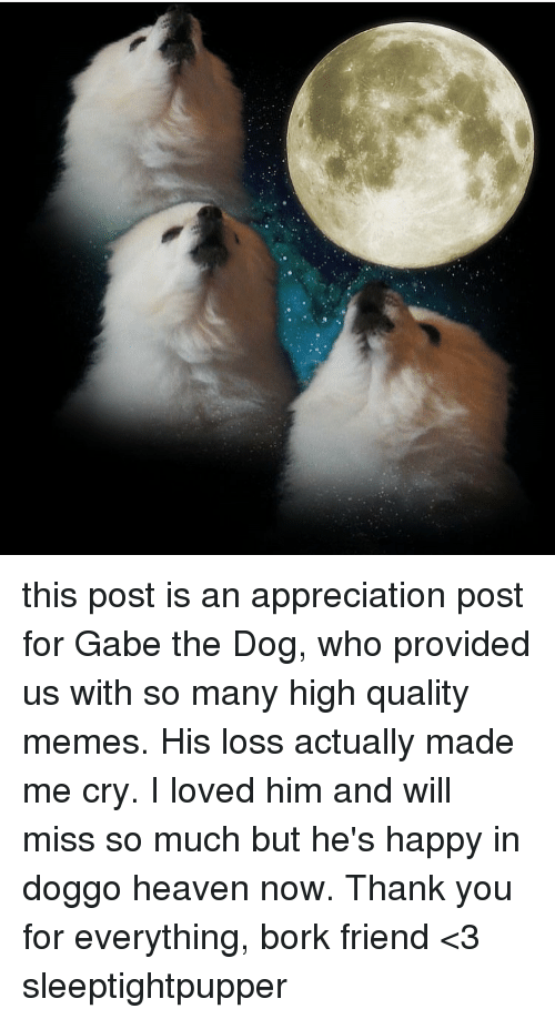 Gabe: this post is an appreciation post for Gabe the Dog, who provided us with so many high quality memes. His loss actually made me cry. I loved him and will miss so much but he's happy in doggo heaven now. Thank you for everything, bork friend <3 sleeptightpupper