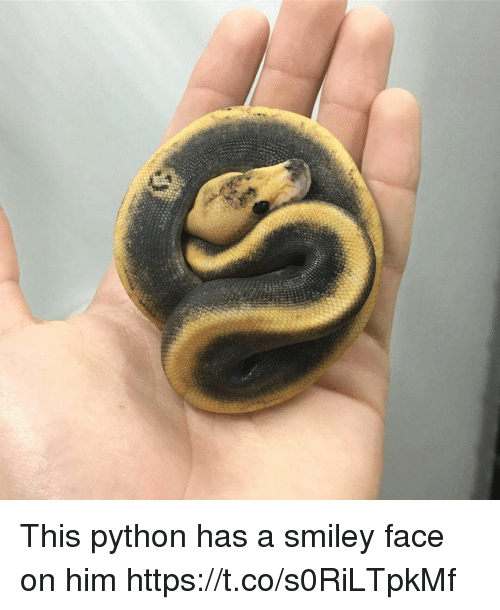 smileys: This python has a smiley face on him https://t.co/s0RiLTpkMf