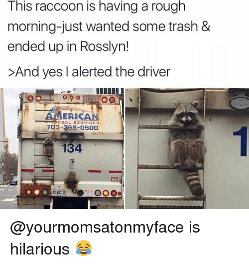 Memes, Trash, and American: This raccoon is having a rough  morning-just wanted some trash &  ended up in Rosslyn!  >And yes alerted the driver  HEIL  C  AMERICAN  OSAL SERVICES  134 @yourmomsatonmyface is hilarious 😂