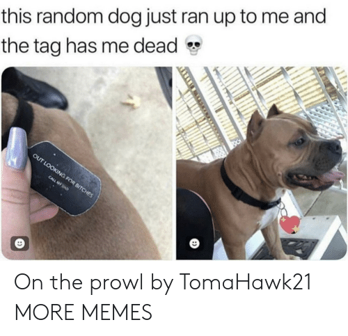 prowl: this random dog just ran up to me and  the tag has me dead On the prowl by TomaHawk21 MORE MEMES