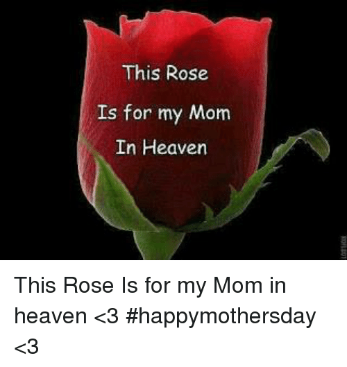 Dank, Heaven, and Rose: This Rose  Is for my Mom  In Heaven This Rose Is for my Mom in heaven <3 #happymothersday <3