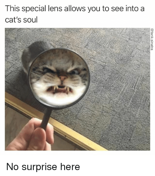 Cats, Funny, and Soul: This special lens allows you to see into a  cat's soul No surprise here