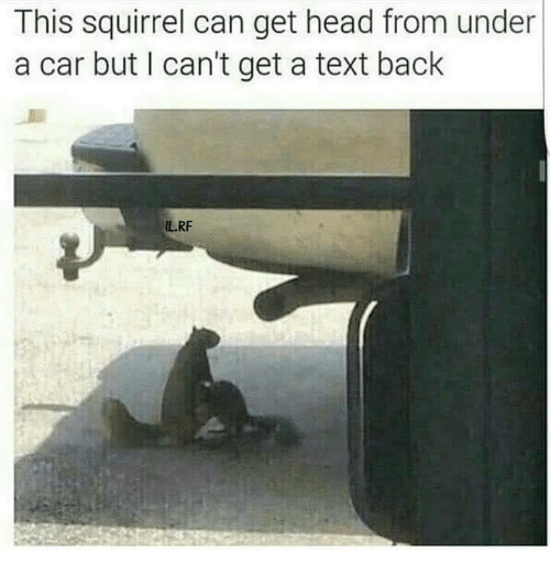 Cant Get A Text Back: This squirrel can get head from under  a car but lI can't get a text back  ILRF