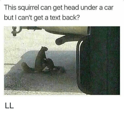 Cant Get A Text Back: This squirrel can get head under a car  but I can't get a text back? LL