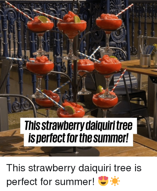 Dank, Summer, and Tree: This strawberry daiquirntree  ls perfectfor the summer! This strawberry daiquiri tree is perfect for summer! 😍☀️