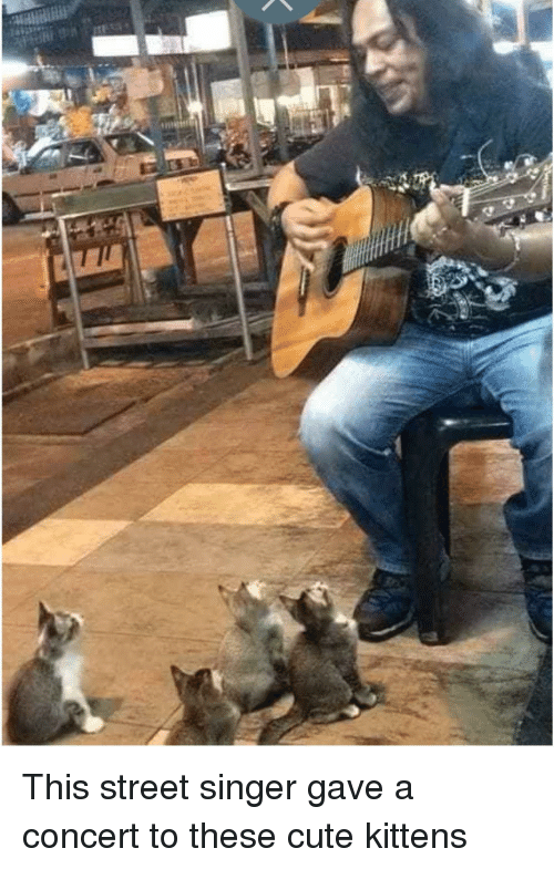 cute kittens: This street singer gave a concert to these cute kittens