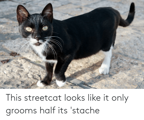 stache: This streetcat looks like it only grooms half its 'stache