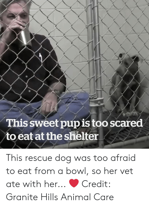 rescue dog: This sweet pupis too scared  to eat at the shelter This rescue dog was too afraid to eat from a bowl, so her vet ate with her... ❤️  Credit: Granite Hills Animal Care