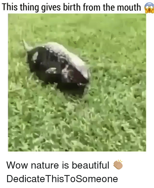 Funny, Birth, and Wows: This thing gives birth from the mouth Wow nature is beautiful 👏🏽 DedicateThisToSomeone