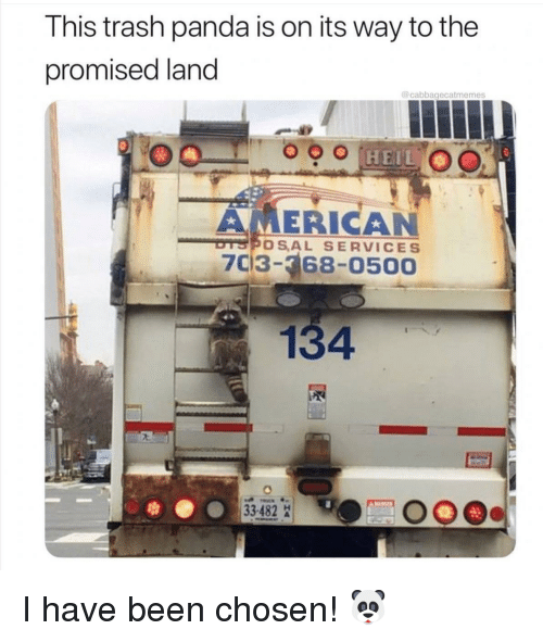 Trash Panda: This trash panda is on its way to the  promised land  @cabbagecatmemes  AMERICAN  thプやOS,AL SERVICES  703-368-0500  134 I have been chosen! 🐼