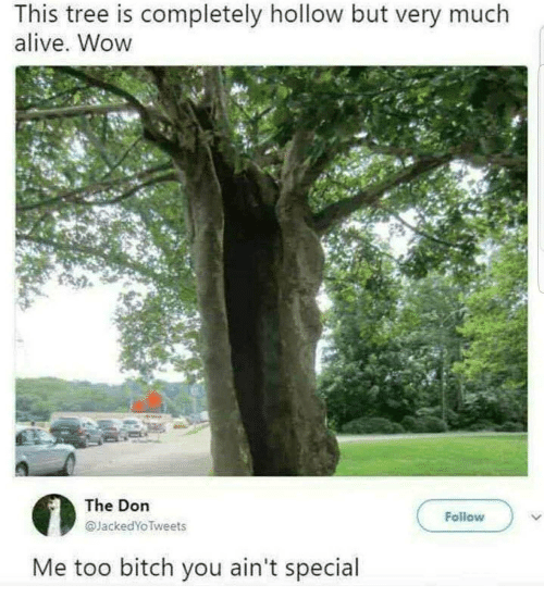 Alive, Bitch, and Wow: This tree is completely hollow but very much  alive. Wow  The Dorn  @JackedYoTweets  Follow  Me too bitch you ain't special