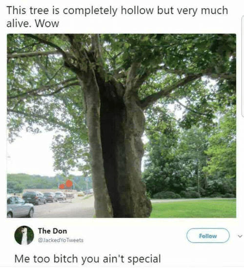 Alive, Bitch, and Wow: This tree is completely hollow but very much  alive. Wow  The Dorn  @JackedYo Tweets  Follow  Me too bitch you ain't special