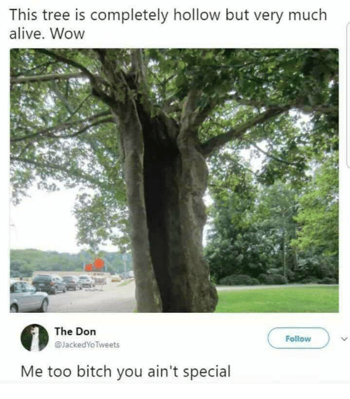 Alive, Bitch, and Wow: This tree is completely hollow but very much  alive. Wow  The Don  @JackedYoTweets  Follow  Me too bitch you ain't special