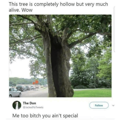 The Don: This tree is completely hollow but very much  alive. Wow  The Don  @JackedYo Tweets  Follow  Me too bitch you ain't special