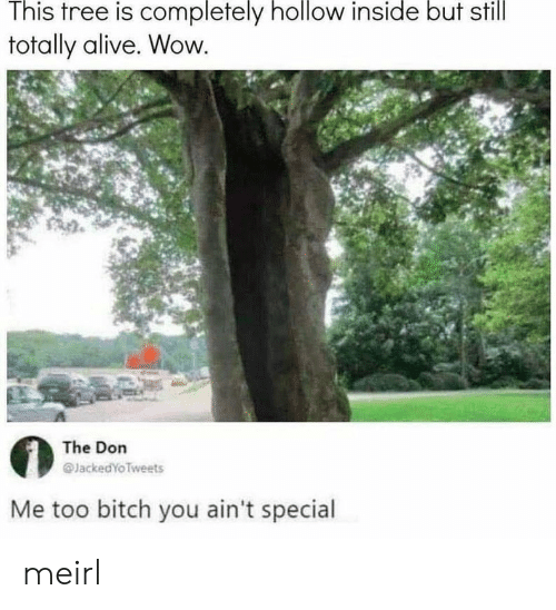The Don: This tree is completely hollow inside but still  totally alive. Wow  The Don  @JackedYoTweets  Me too bitch you ain't special meirl